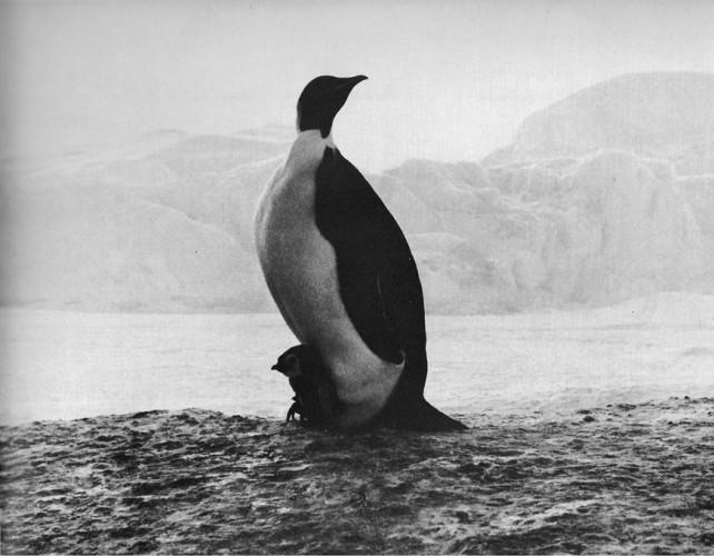 meitchak_madonna-antarktidy