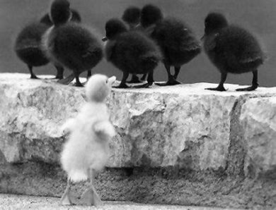 Бремя белой вороны.  Заметки о расовом вопросе